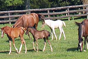 Virginia Horse Farms for Sale