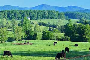 Cattle Farms in Virginia for Sale